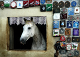 Pampered Horse 1