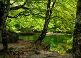 The Fairies' Pond 37