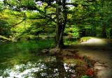 The Fairies' Pond 35