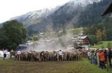 Kleinwalsertal 2007 - Viehscheid am 19.9.2007