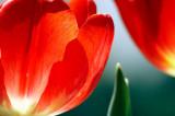 Flower Galleries