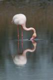 Flamingo's kiss