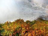 le tapis jaune et rouge de l'automne