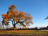 le parc Montmorency