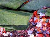 roches vertes et feuilles rouilles