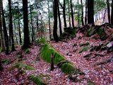 Forêt d'automne à St-Nicolas
