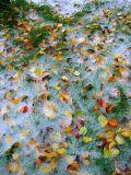 mélange d'automne et d'hiver