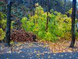 le bois et les feuilles vertes