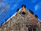 les planches du toit