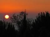 le soleil au raz des arbres