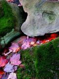 Ruisseau de feuilles