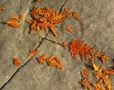 fragments d'automne