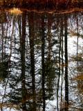 le reflet des arbres sur l'étang
