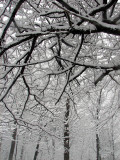 les arbres de neige