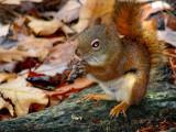 L'écureuil du parc