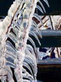 les plumes de glace