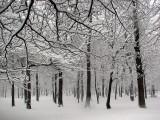 la forêt pendant la tempête
