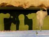 Le glaçon et son ombre