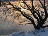 L'arbre sur le bord de l'eau au lever du jour