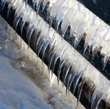 La glace sur la clôture