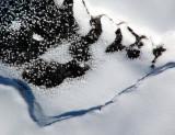 costale neigeuse