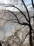 l'arbre en glace