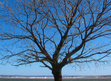 l'arbre et la rive sud