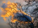L'arbre enflammé