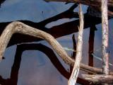 L'ombre des bois