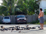 le lunch des pigeons