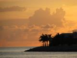 Ciel orange palmier noir/orange sky and black palm tree