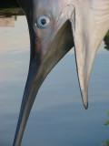 Marlin de plastique