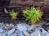 deux touffes d'herbes