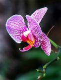 orchidée  violette et orange