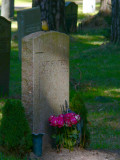 Bird on a stone