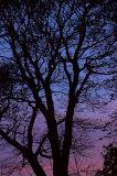 4th November 2006  nearly winter