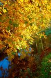 13th November 2006  a bit of colour