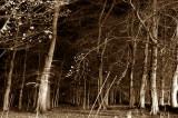 23rd November 2006  trees at night