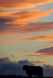 17th August 2007  new dawn