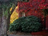 autumn's paintbrushes