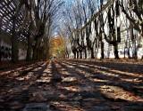 leaves' gallery