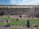 penguins... thousands...