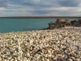 shells' beach