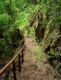 rainforest at Patagonia??
