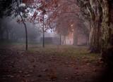 through fog ...