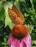 Enchanting Flower