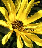 Bug on Flower