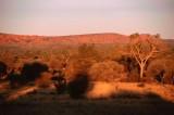 Savanna near Kings Canyon