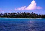 Palm Trees and Cyan Sea