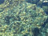 kapoho tide pools (josh) picture 049.jpg